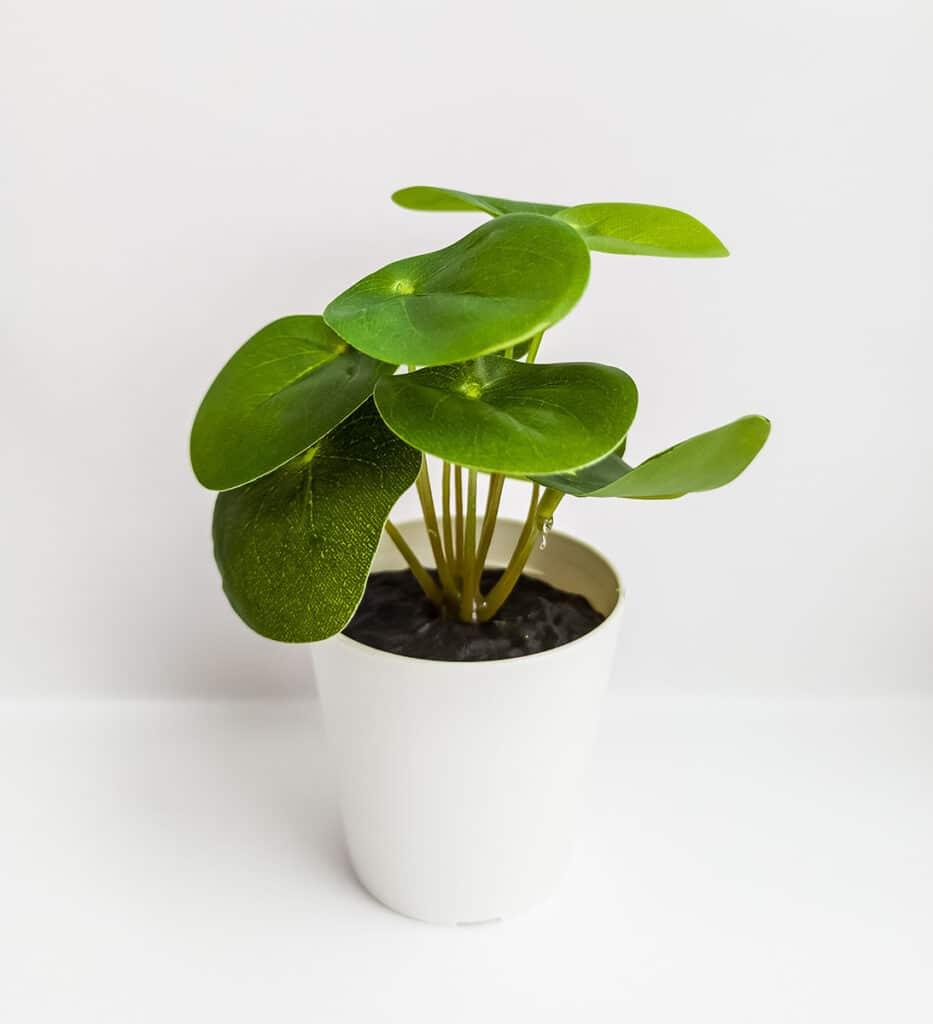 casa-maceta-vegetacion