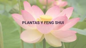 plantas-y-fengshui_PORTADA